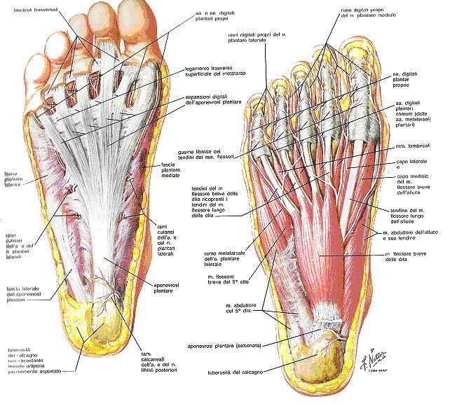 Siccome loperazione su rimozione di vene su una gamba è chiamata