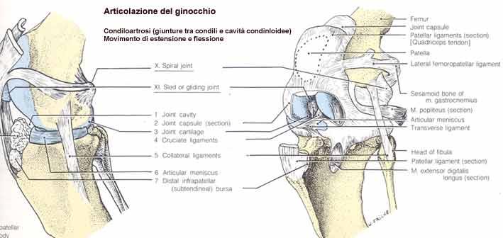 Meniscosi cure e rimedi per il dolore al Ginocchio..