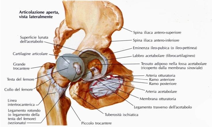 Fisioterapia per la frattura composta dell'acetabolo