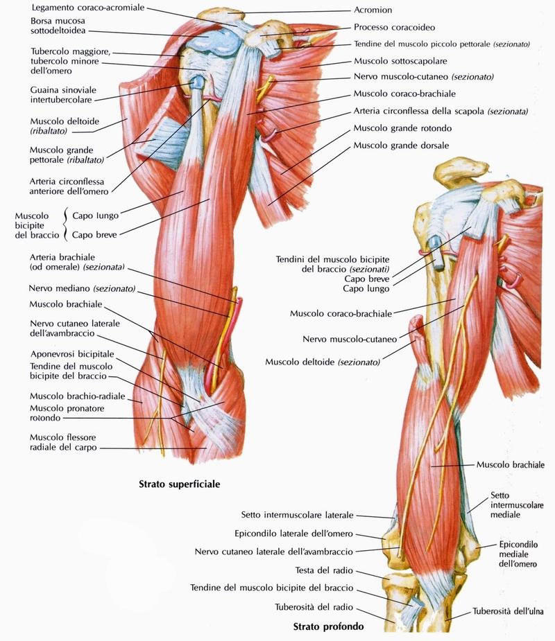 Dolore al Braccio dovuto ai Muscoli Epitrocleari come si Cura