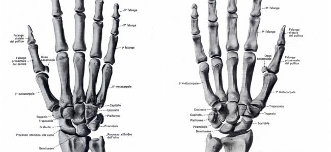Scafoide, riabilitazione dopo la frattura dell'osso della Mano